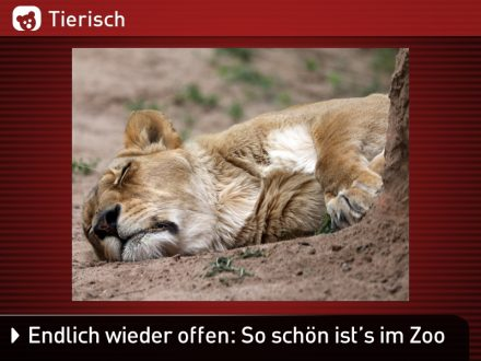 Zoo-Tiere_1