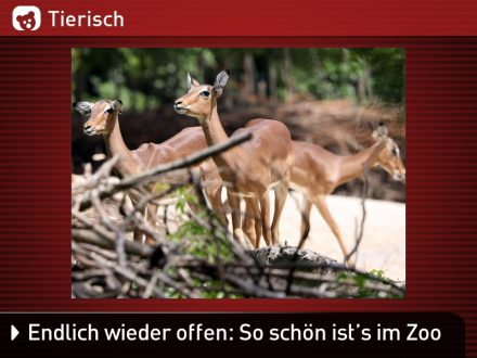Zoo-Tiere_10