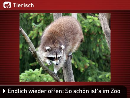 Zoo-Tiere_12