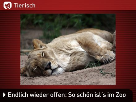 Zoo-Tiere_13