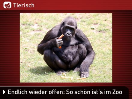 Zoo-Tiere_14