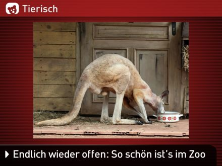 Zoo-Tiere_15