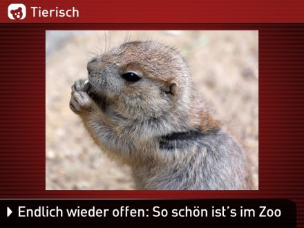 Zoo-Tiere_16