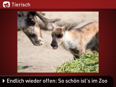 Zoo-Tiere_17