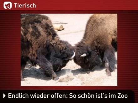 Zoo-Tiere_18