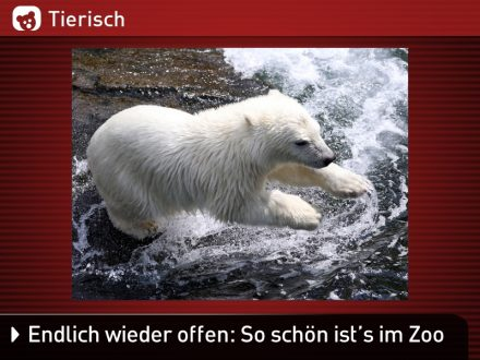 Zoo-Tiere_19