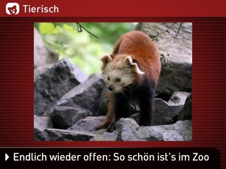 Zoo-Tiere_2