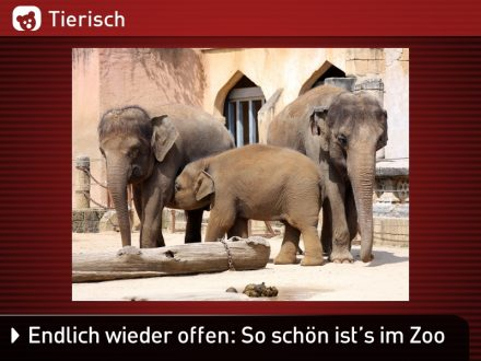 Zoo-Tiere_26