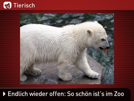 Zoo-Tiere_27