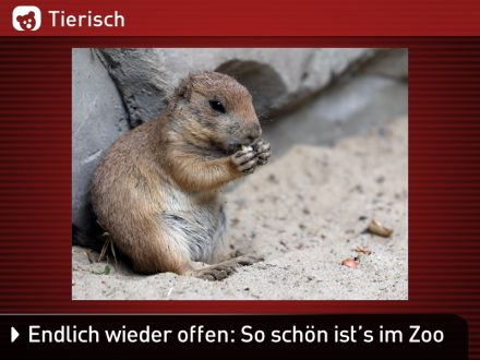 Zoo-Tiere_28