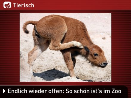 Zoo-Tiere_29