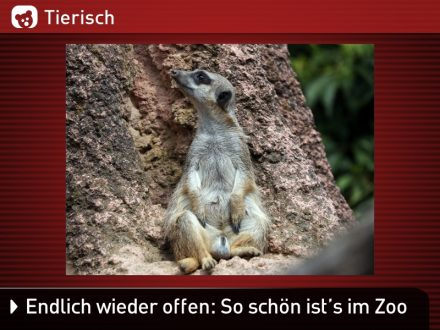 Zoo-Tiere_3