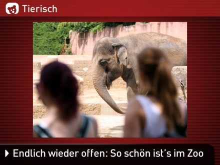 Zoo-Tiere_30