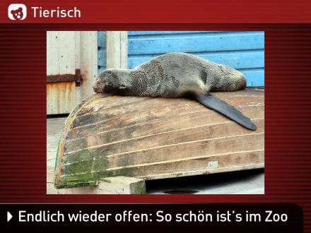 Zoo-Tiere_5