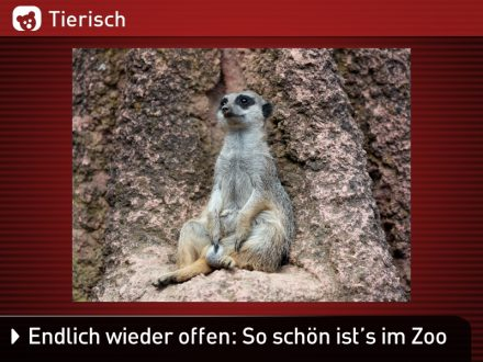 Zoo-Tiere_6