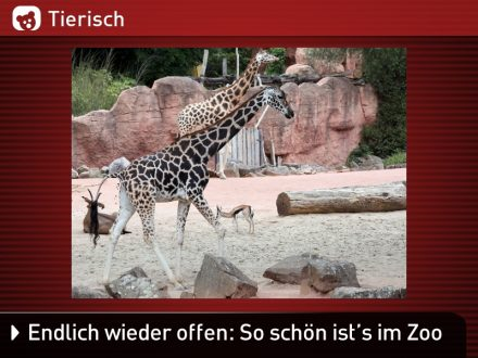 Zoo-Tiere_7