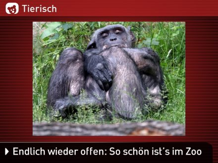 Zoo-Tiere_8
