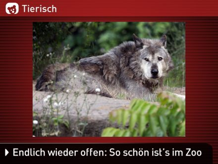 Zoo-Tiere_9